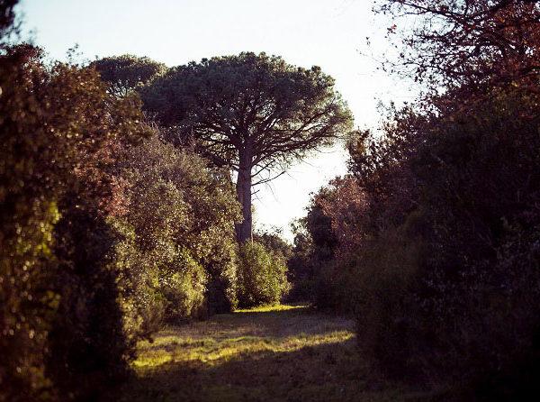 Bois de la Ribasse