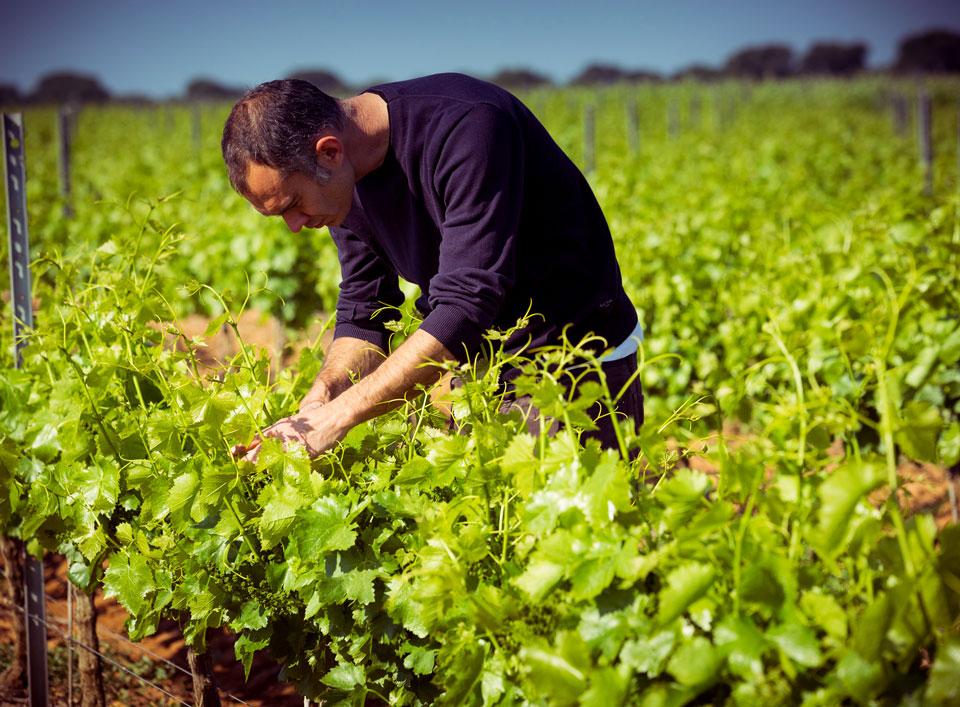 Blaise de Bordas dans le vignoble du Domaine d'Espeyran