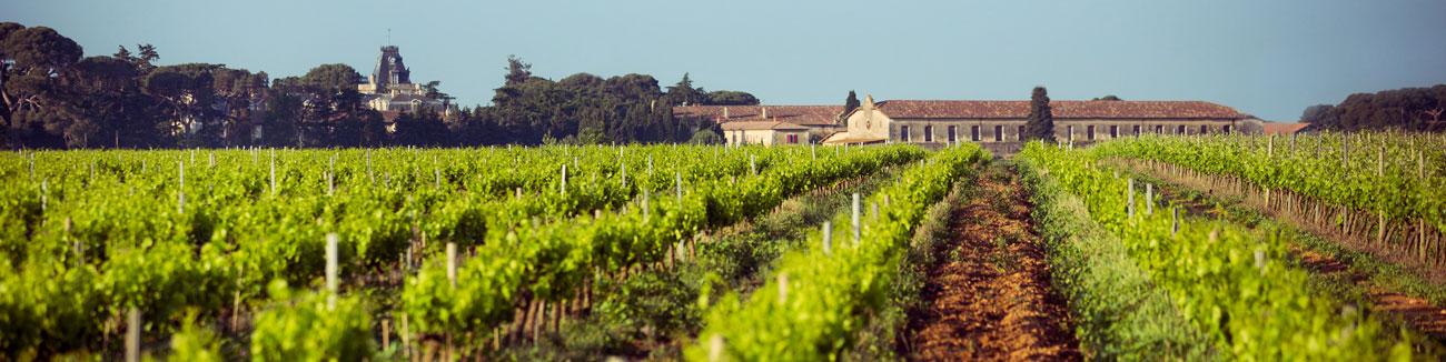Le vignoble du Domaine d'Espeyran